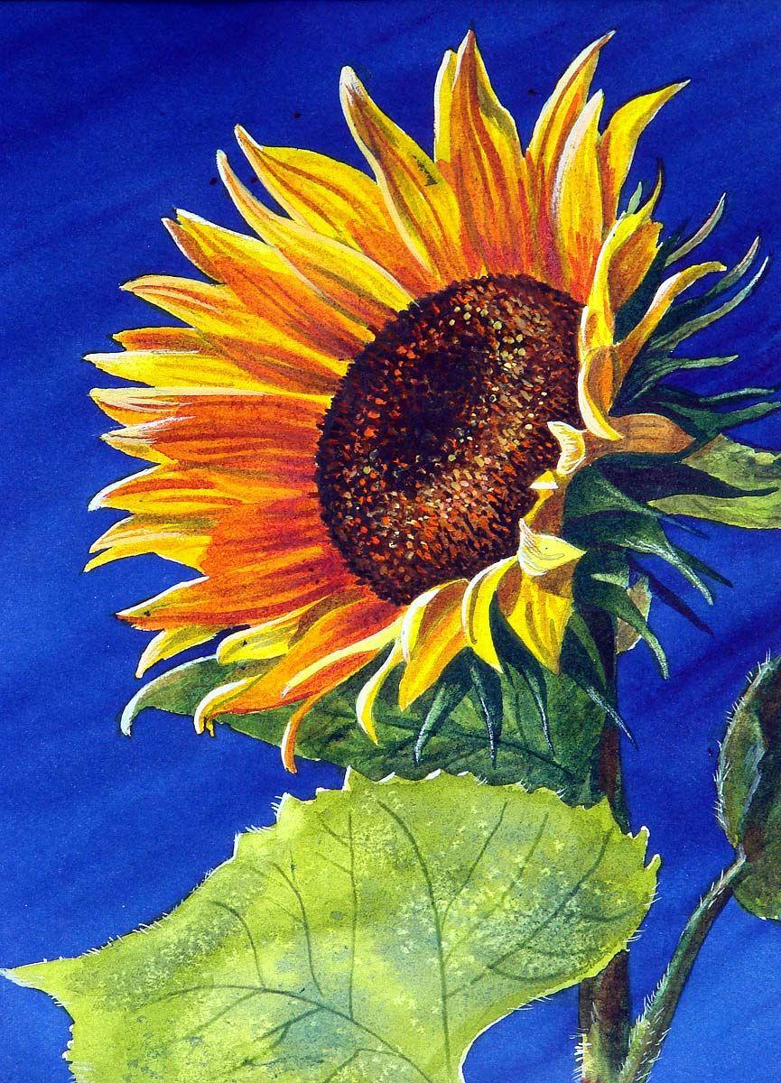 Tranh vẽ bông hoa Hướng Dương đẹp
