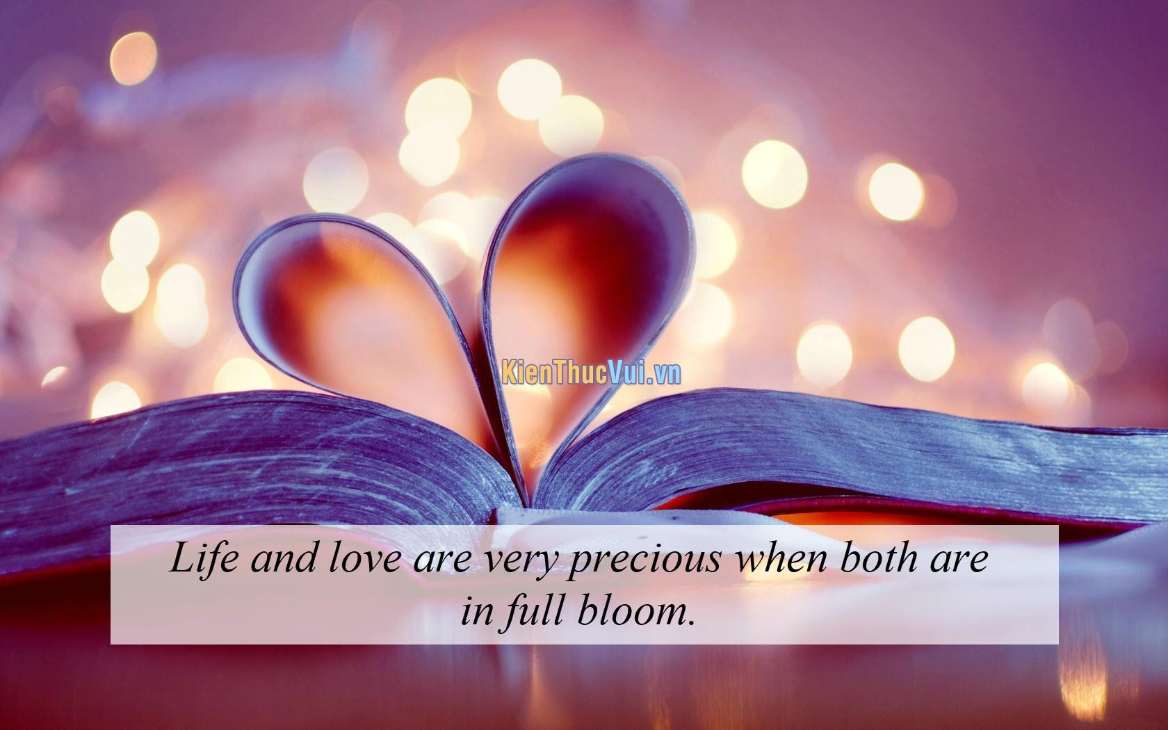 Cuộc sống và tình yêu đều vô cùng quý giá khi chúng đang nở rộ