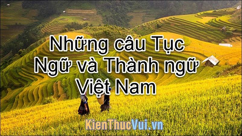 Những câu Câu Tục ngữ và Thành ngữ Việt Nam hay nhất