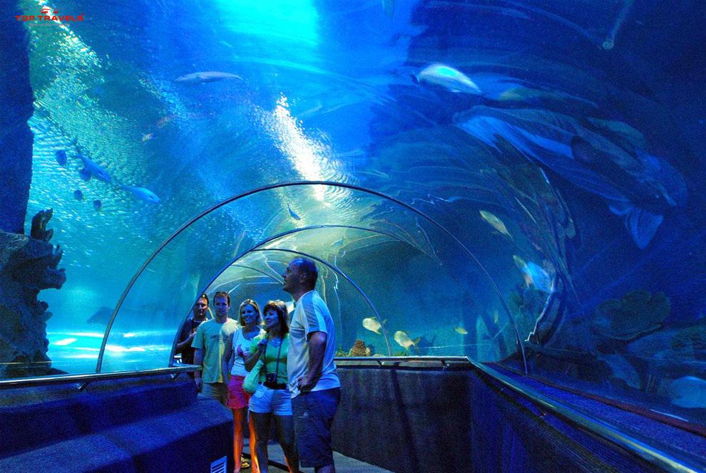 Bể cá trong thủy cung Nha Trang