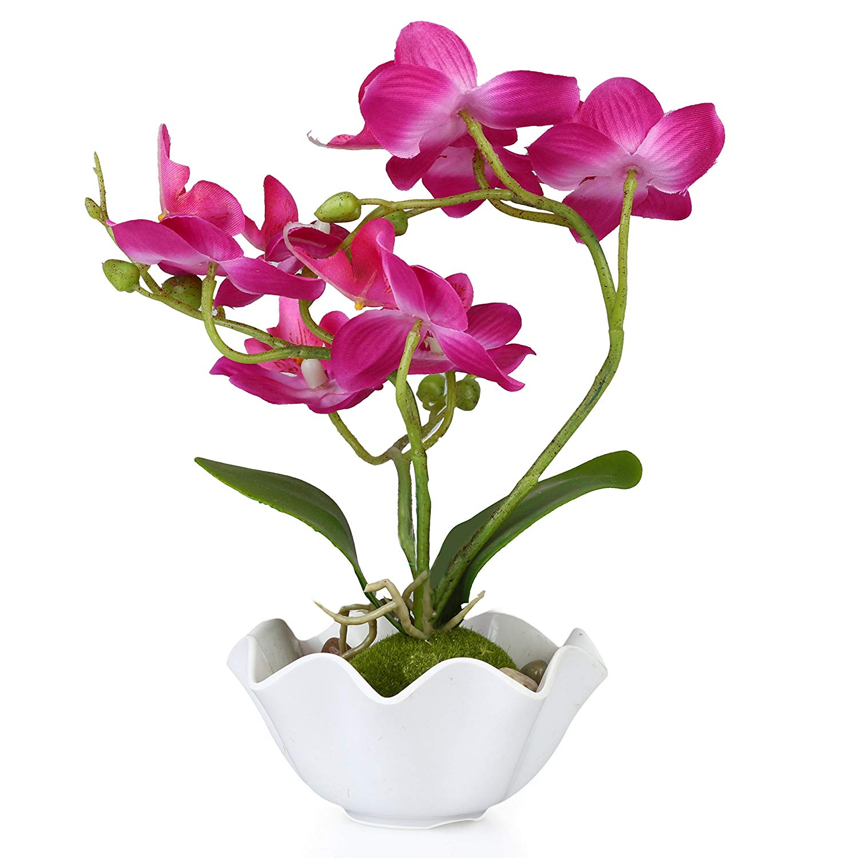 Cây hoa Phong Lan