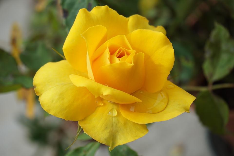 Hình ảnh bông hoa đẹp