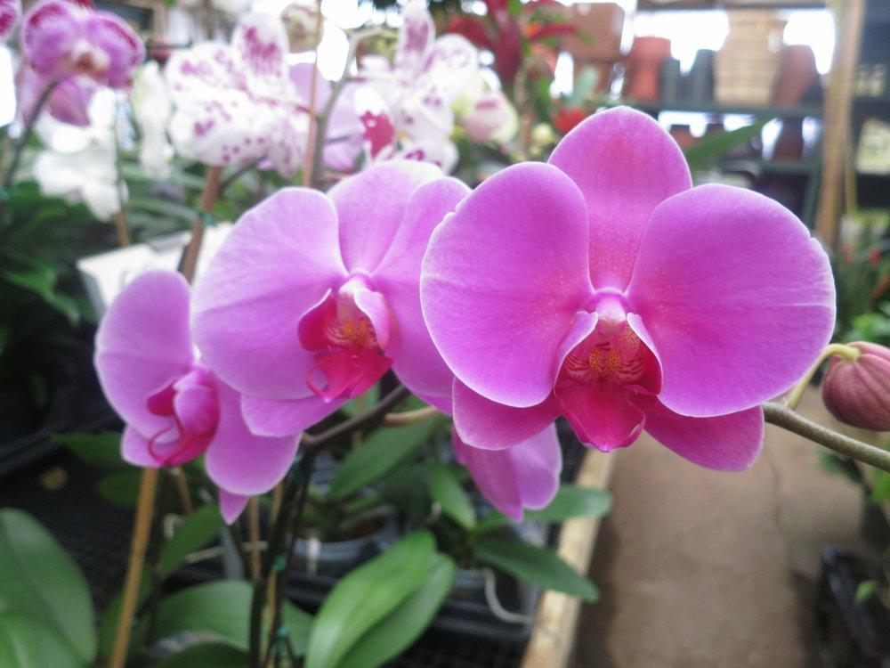 Hình ảnh hoa Lan đẹp nhất thế giới