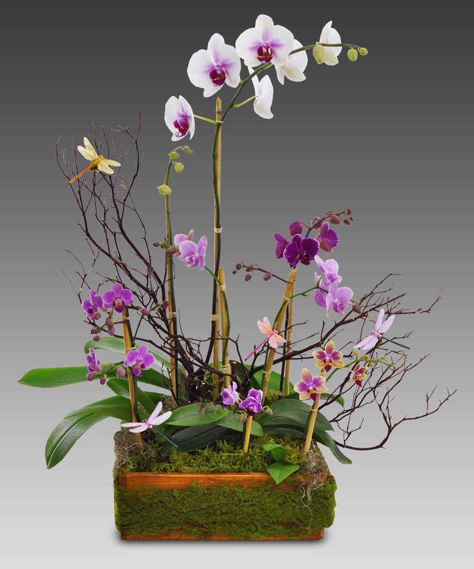 Hình ảnh hoa Lan rừng đẹp