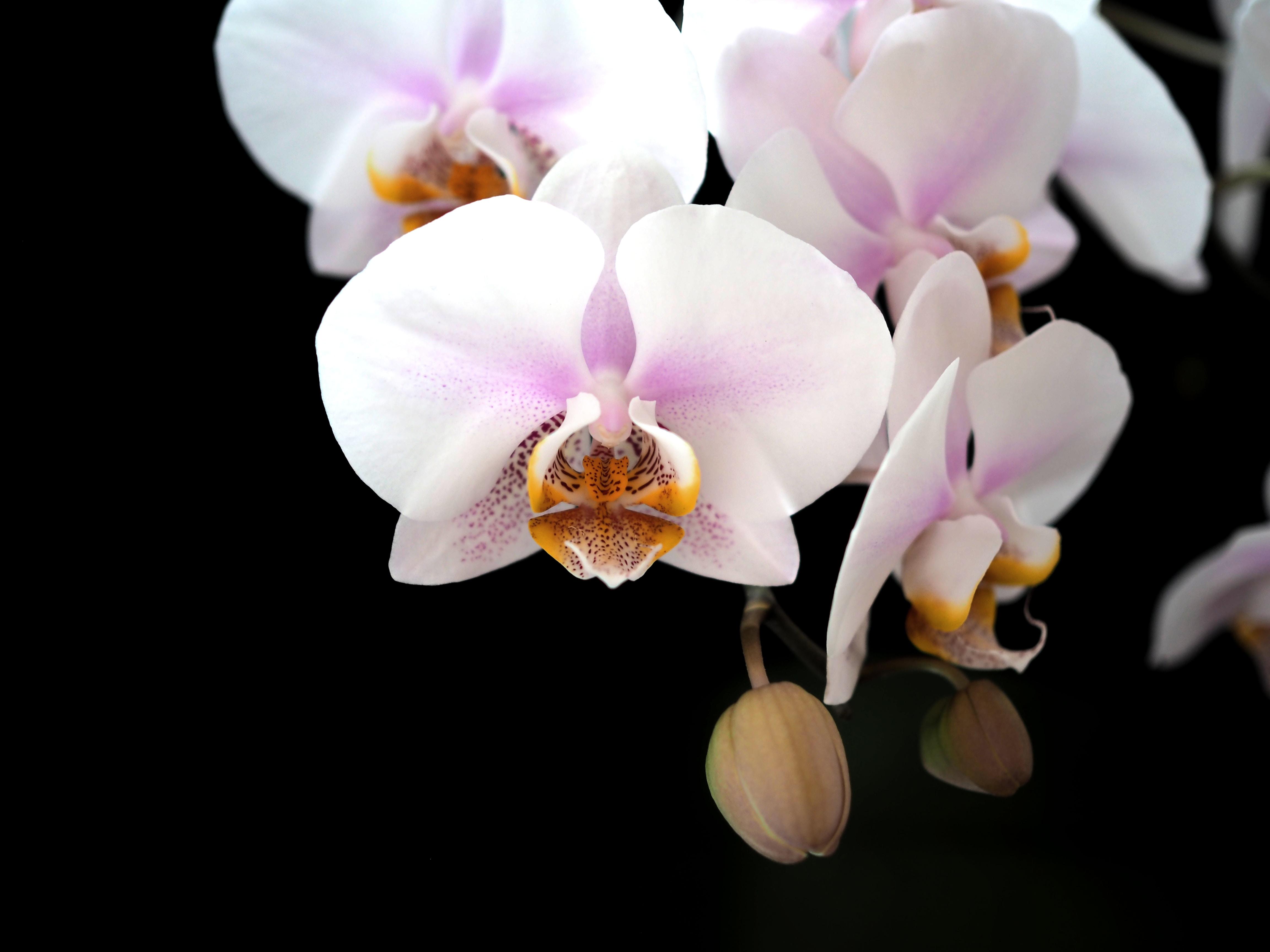 Hình ảnh hoa Lan rừng