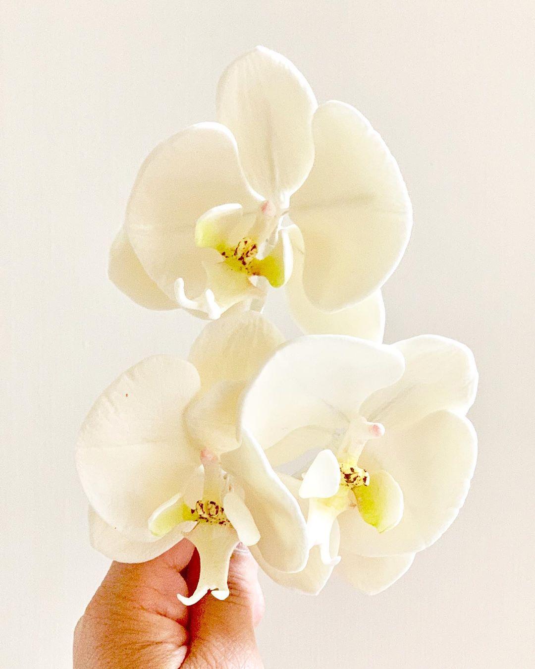 Ảnh hoa Lan Hồ Điệp trắng