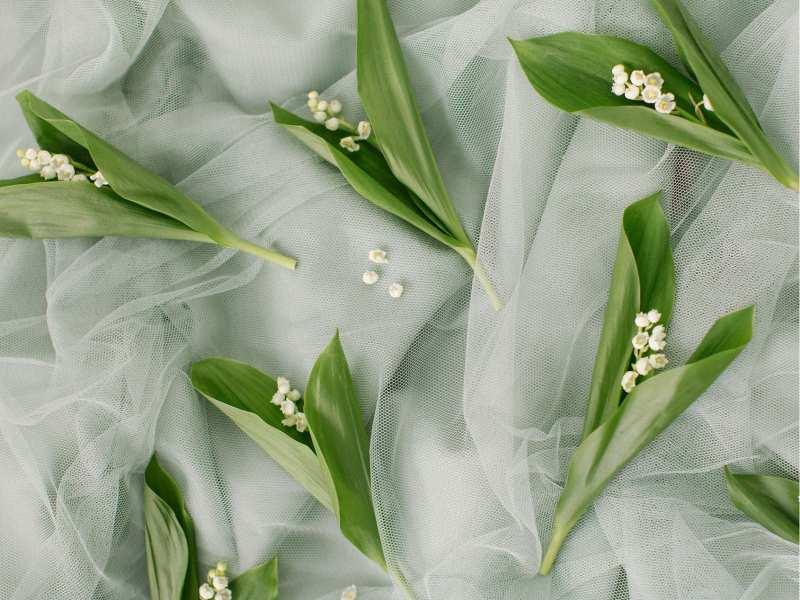 Ảnh Hoa Linh lan đẹp dành cho hôn lễ