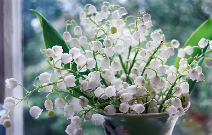 Hình ảnh đẹp nhất về vườn hoa Linh lan