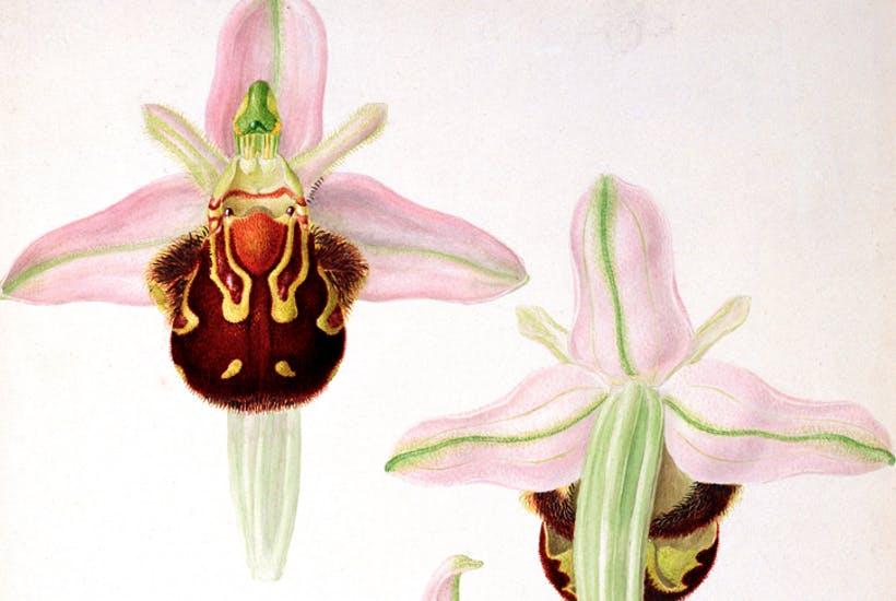 Hình ảnh hoa Lan Hồ Điệp đẹp nhất