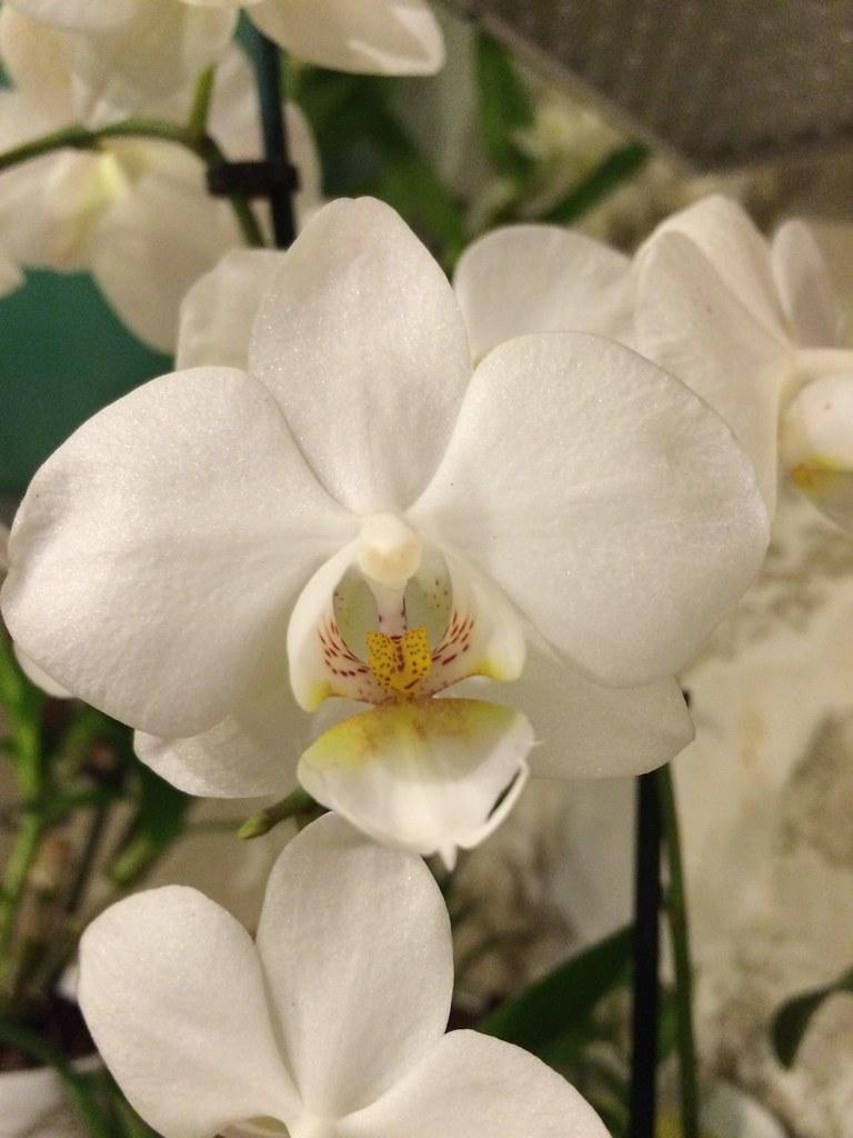 Hình ảnh hoa lan hồ điệp rừng đẹp nhất