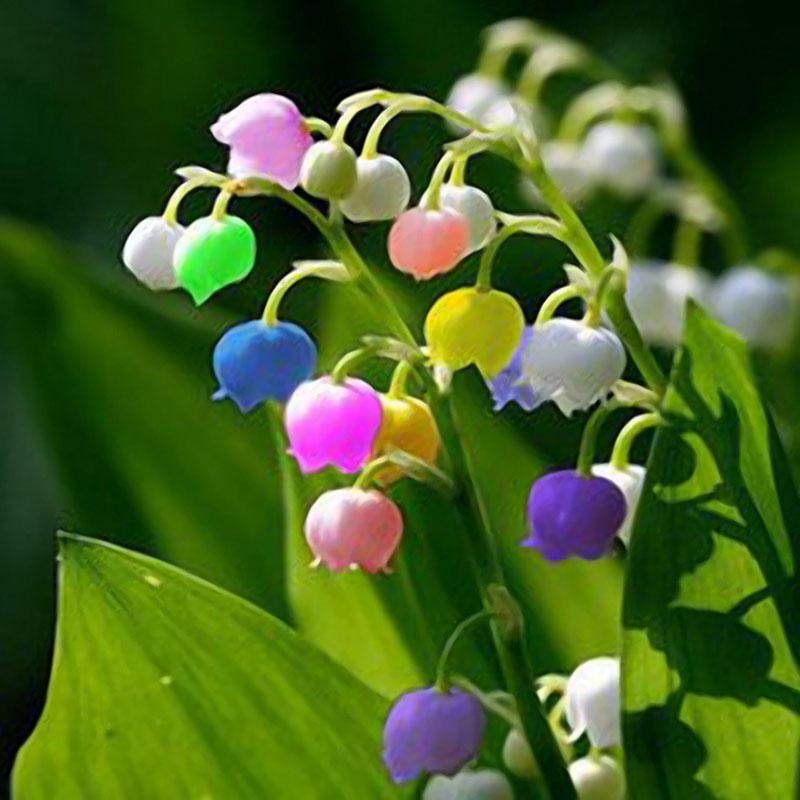 Hình ảnh hoa linh lan đầy đủ màu sắc đẹp nhất