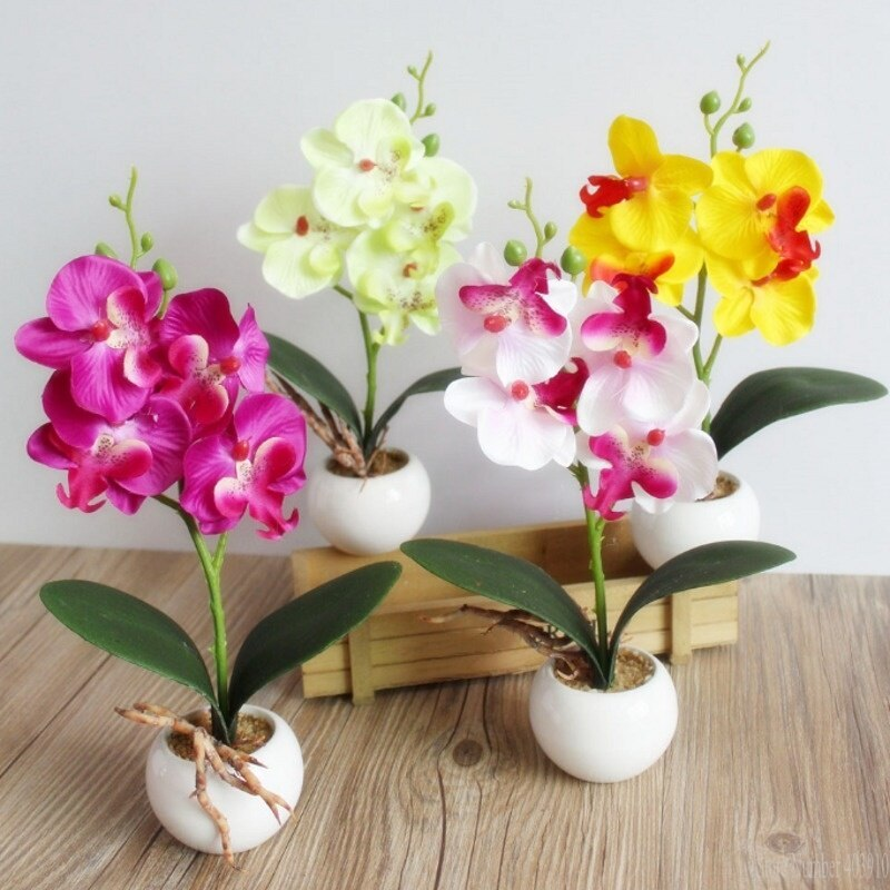 Những hình ảnh chậu hoa lan hồ điệp đẹp