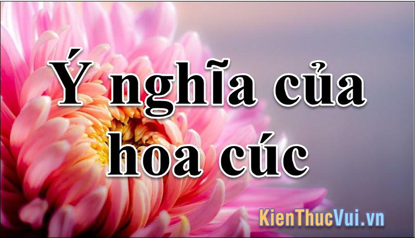 Ý nghĩa hoa cúc trong tình yêu và cuộc sống