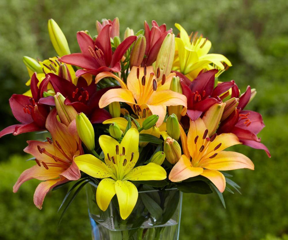 Hình ảnh hoa ly nhiều màu