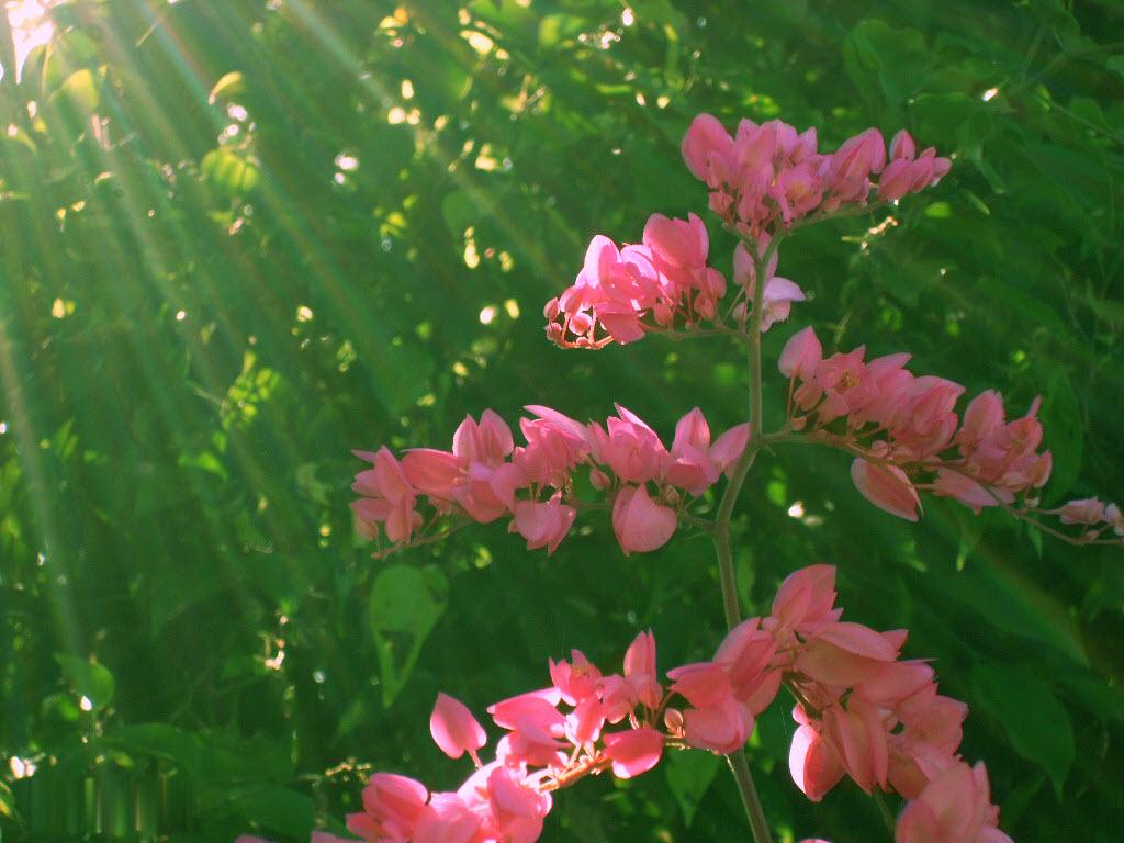 hoa đồng nội đẹp