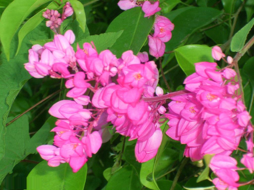 hoa đồng nội khoe dưới ánh nắng