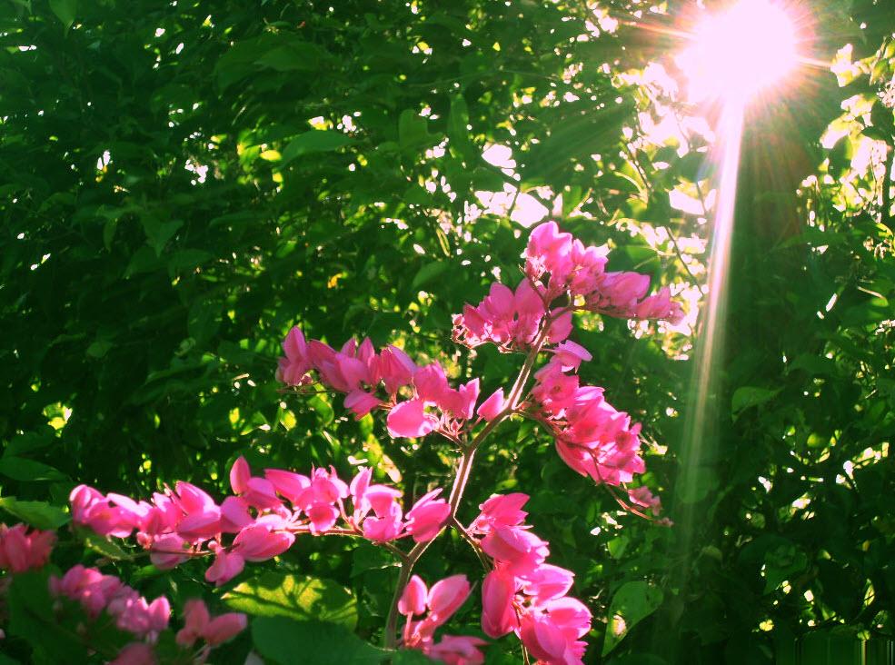 hoa đồng nội khoe sắc