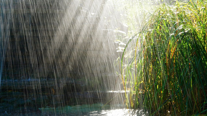 Hình ảnh cơn mưa mùa hạ buồn
