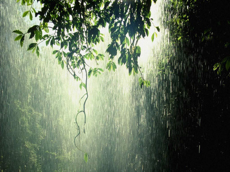 Hình ảnh cơn mưa rào buồn