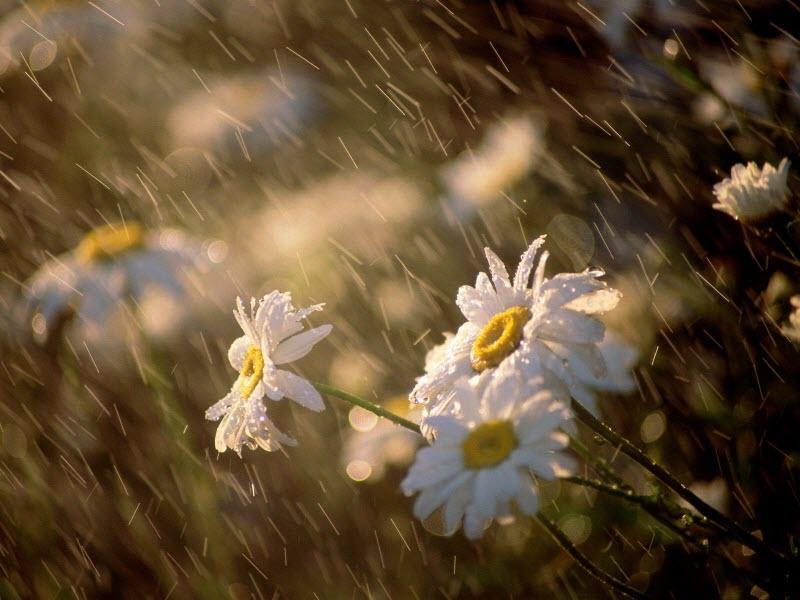 Hình ảnh mưa đẹp