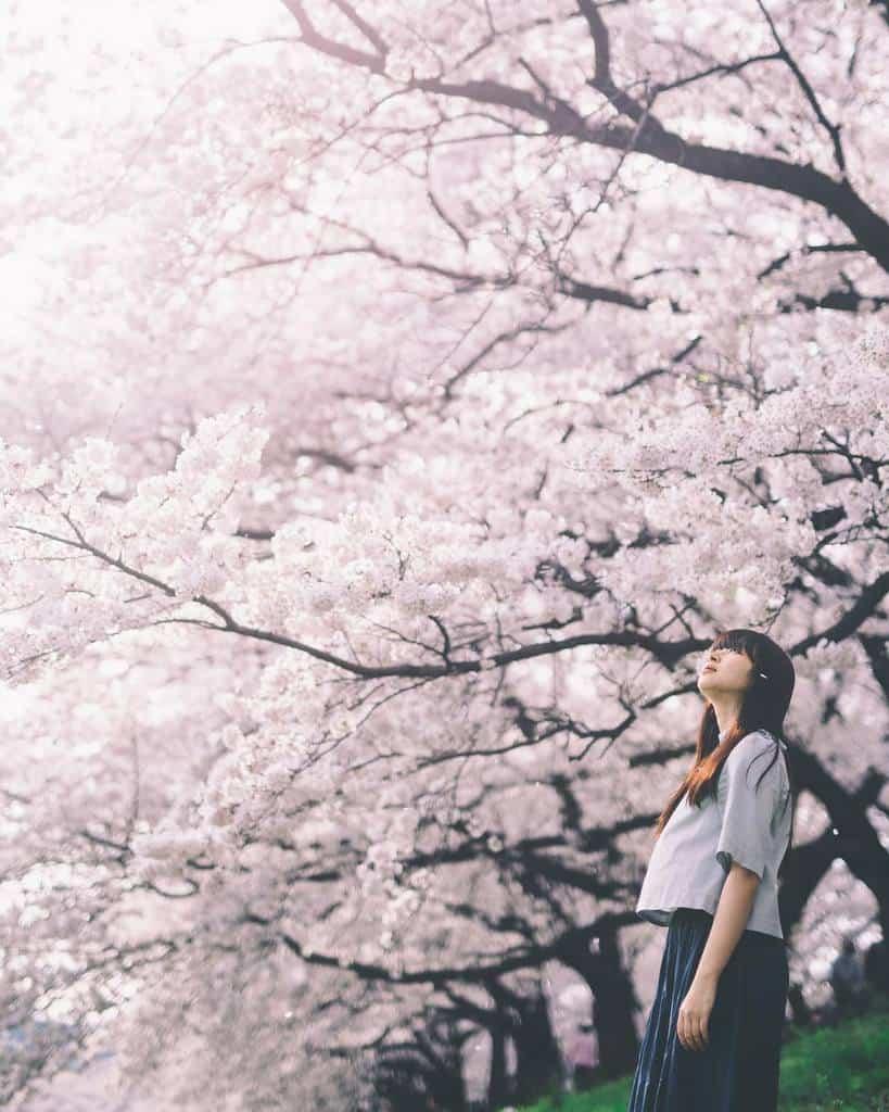 ảnh hoa đào