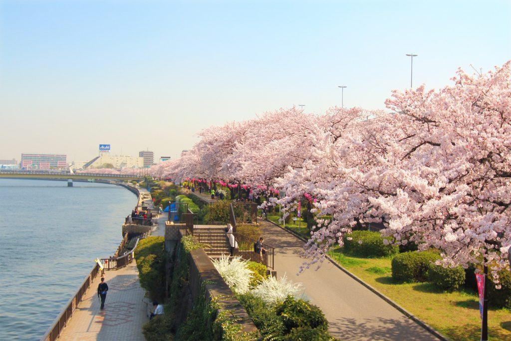 công viên hoa anh đào