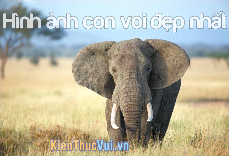 Những hình ảnh con voi đẹp nhất