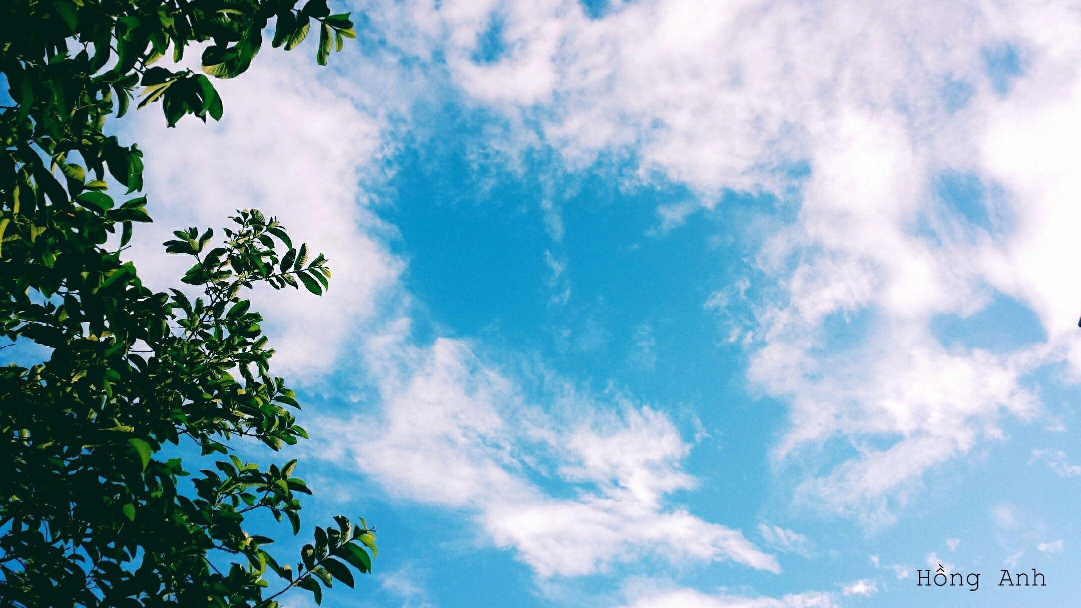 Ảnh bầu trời xanh rất đẹp với tán cây