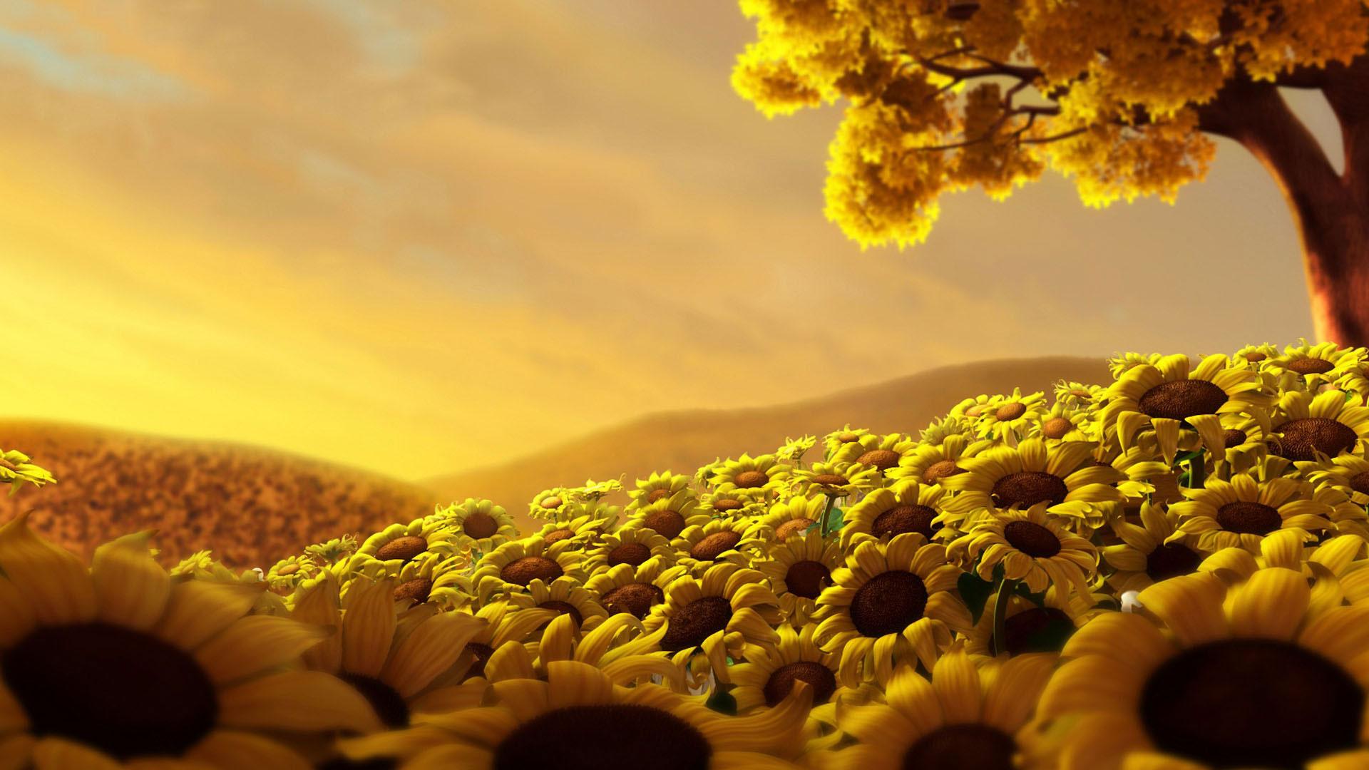 Ảnh nền HD cánh đồng hoa hướng dương