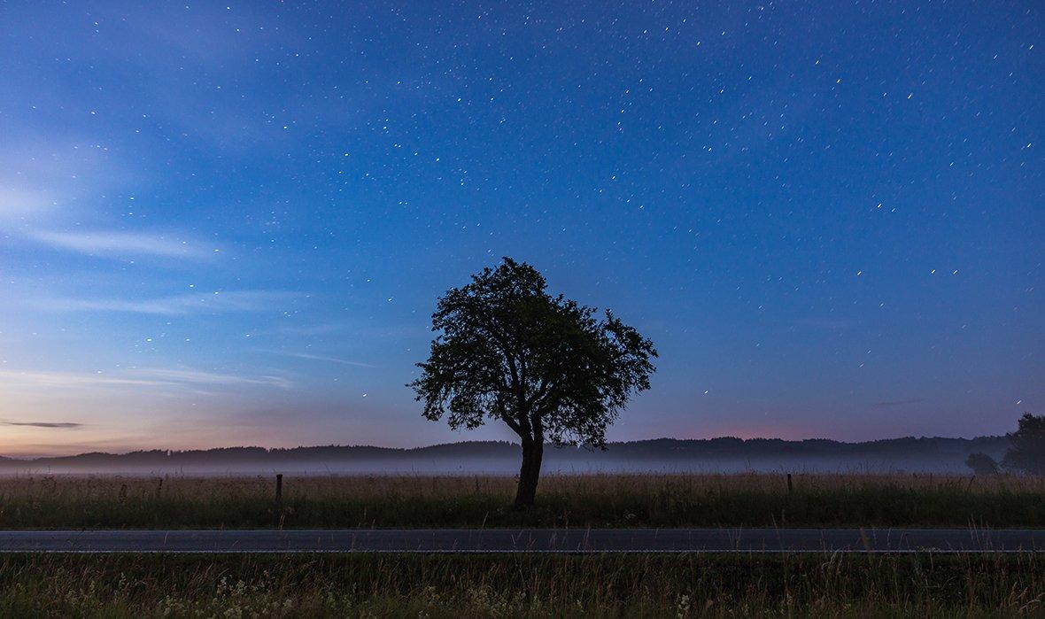 Cảnh bầu trời rất đẹp với một cái cây giữa đồng