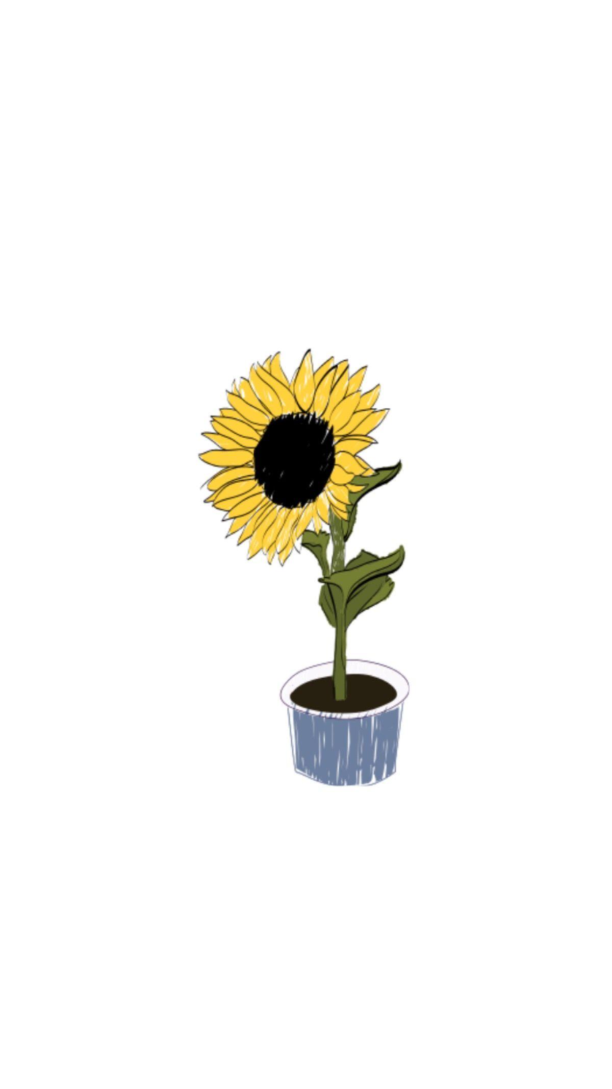 Hình nền điện thoại di động đóa hoa hướng dương