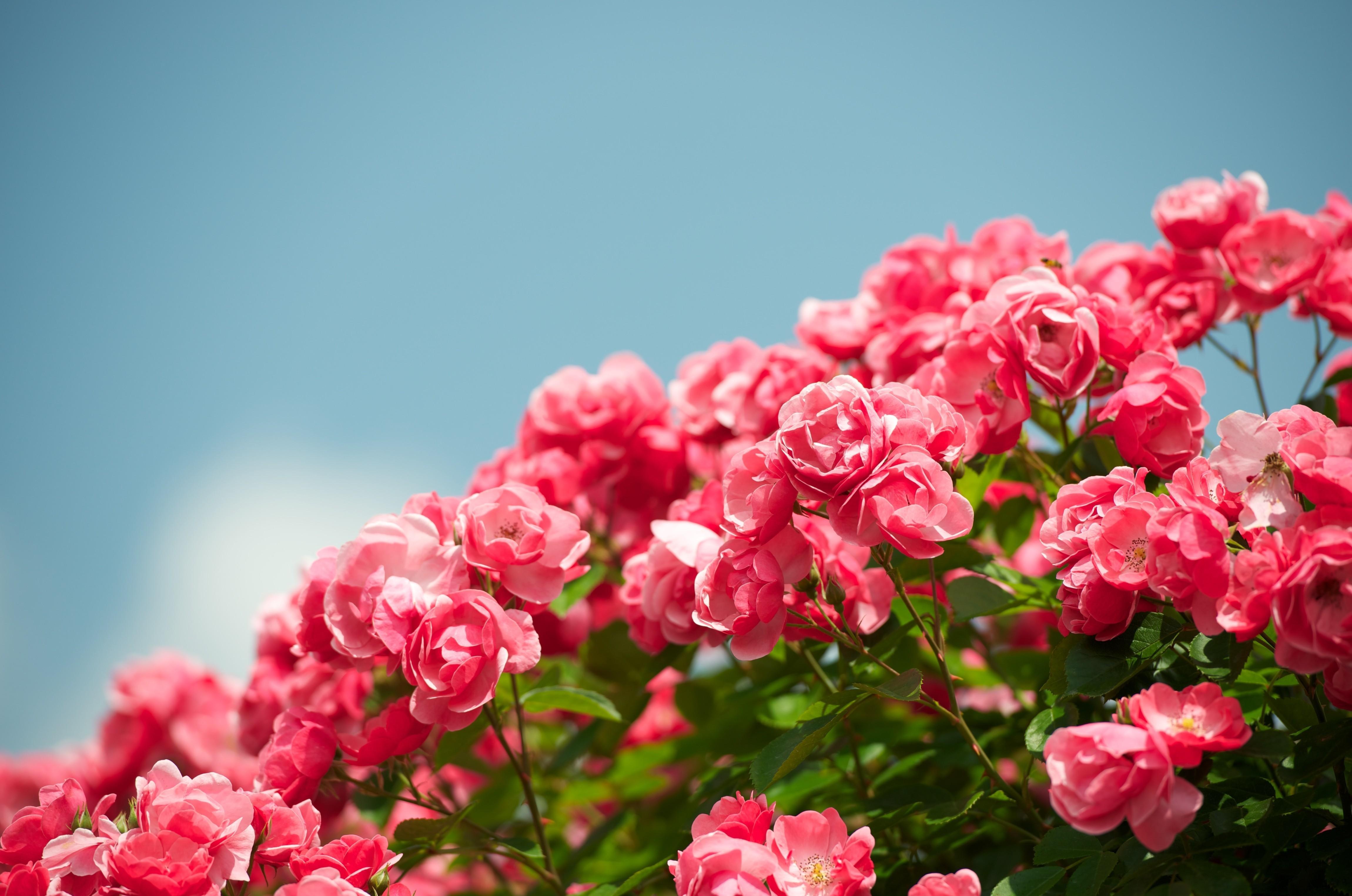 hình nền 4k hoa đẹp