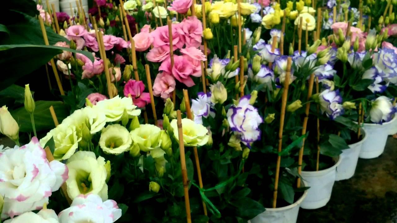 Hình ảnh giỏ hoa Cát Tường đầy đủ màu sắc đẹp nhất