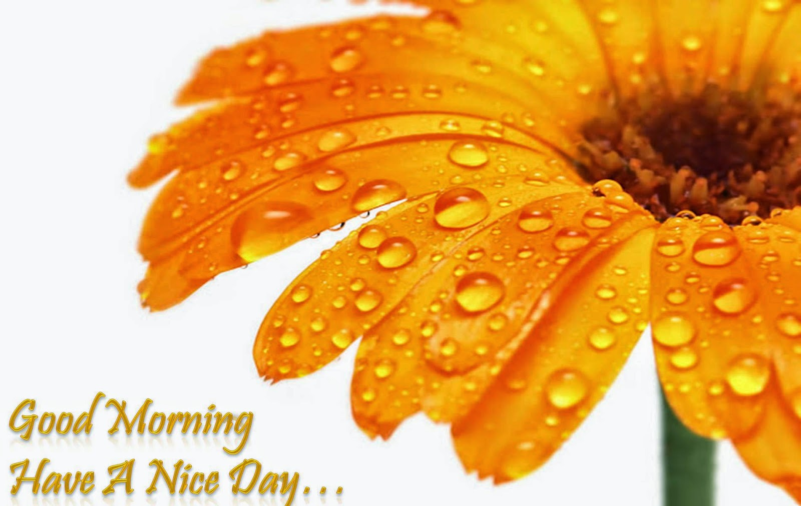 hình ảnh lời chúc buổi sáng