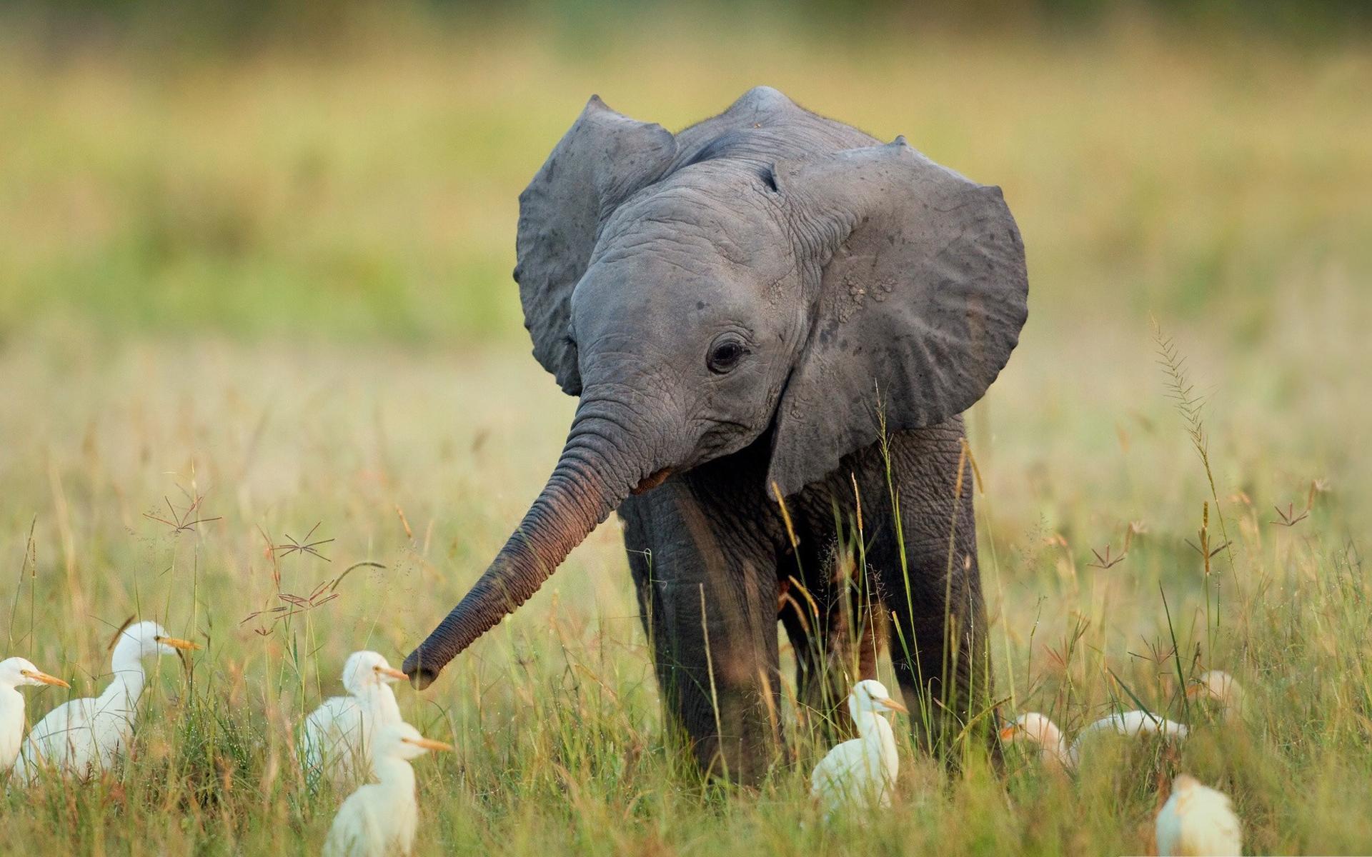Ảnh con voi dễ thương