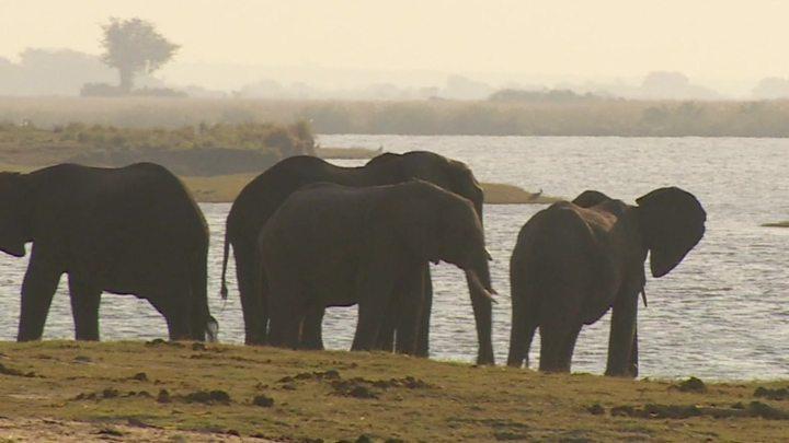 Ảnh đẹp về con voi