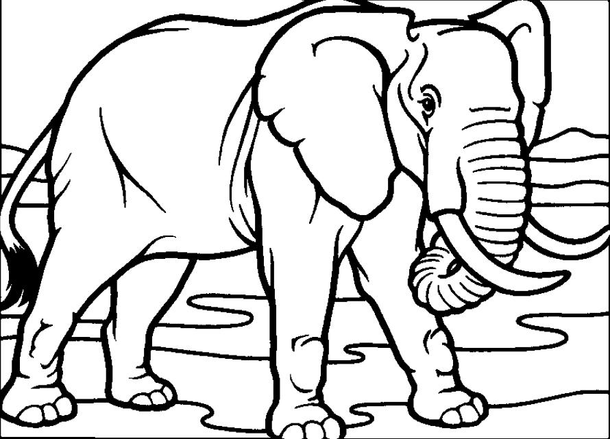 Ảnh tô màu con voi