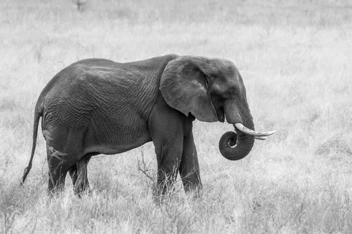 Hình ảnh chú voi con