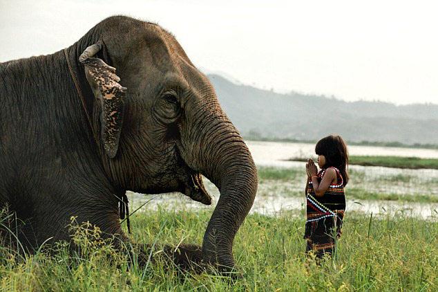 Hình ảnh chú voi ở bản đôn