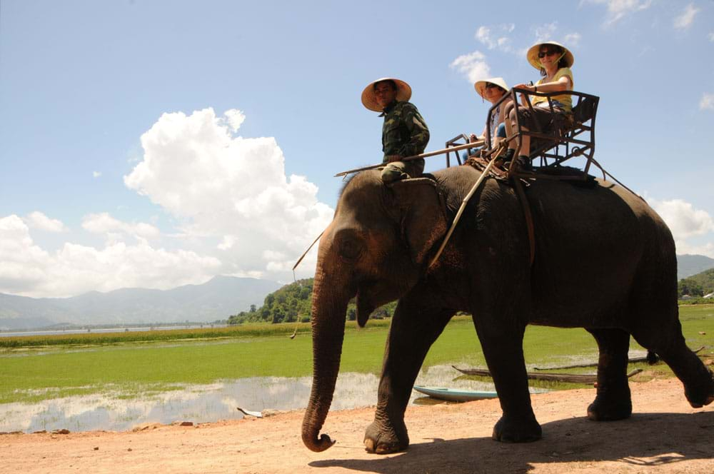 Hình ảnh con voi chở khách