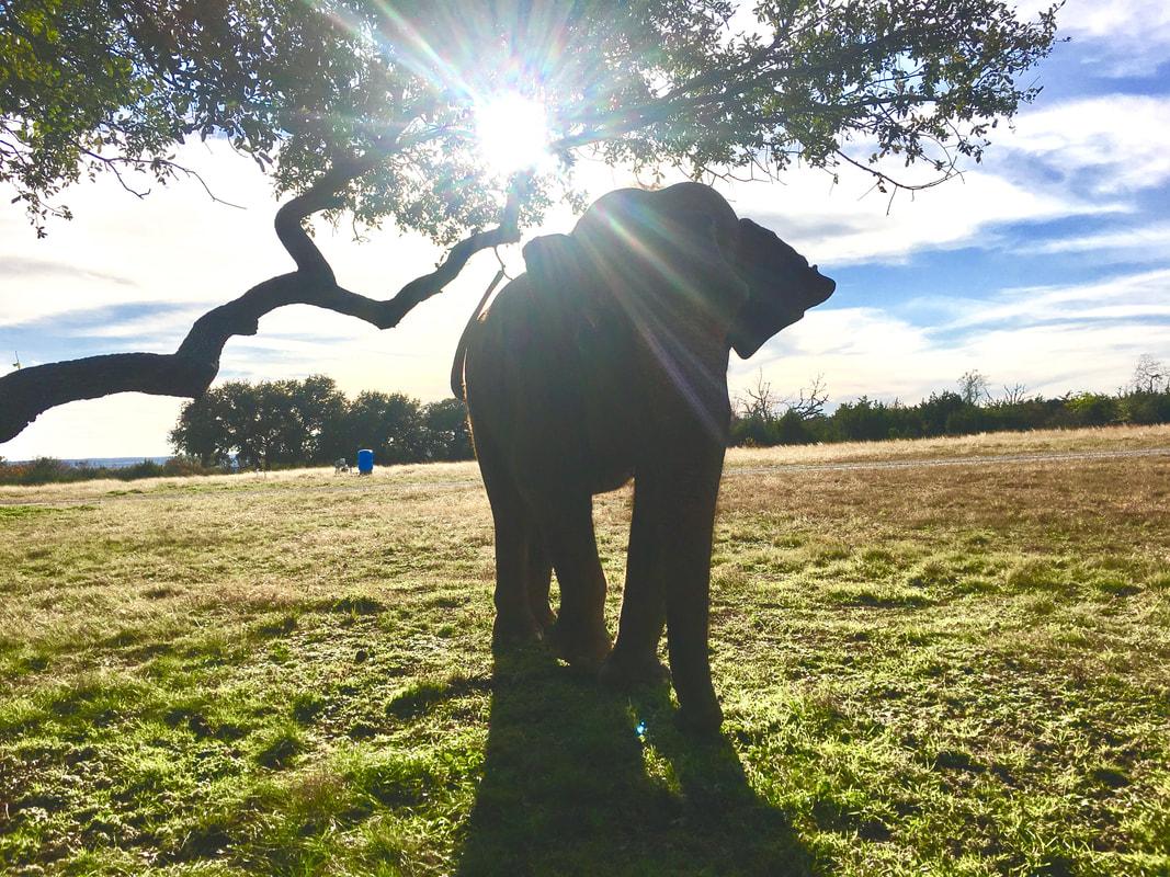 Hình ảnh con voi đẹp