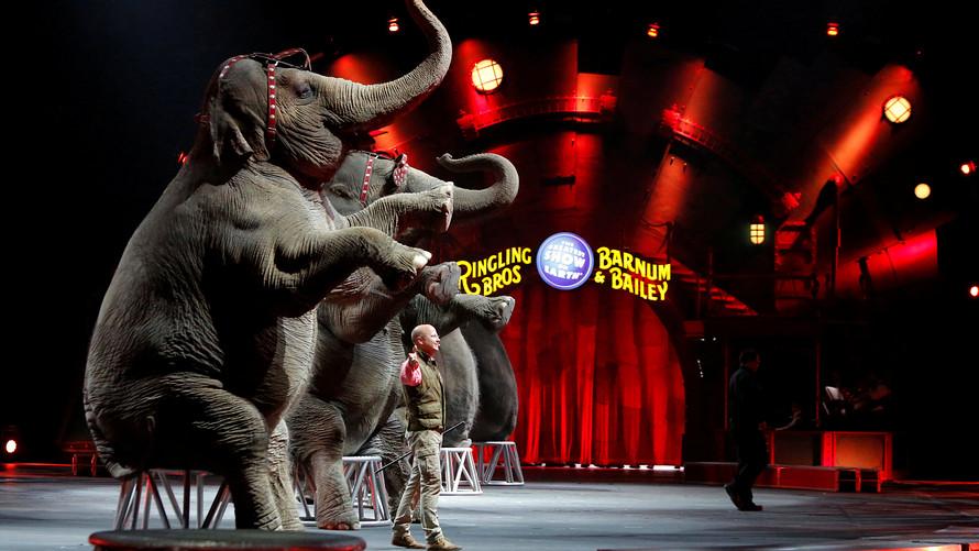Hình ảnh con voi diễn xiếc
