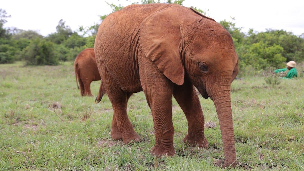 Hình ảnh con voi ở Việt Nam