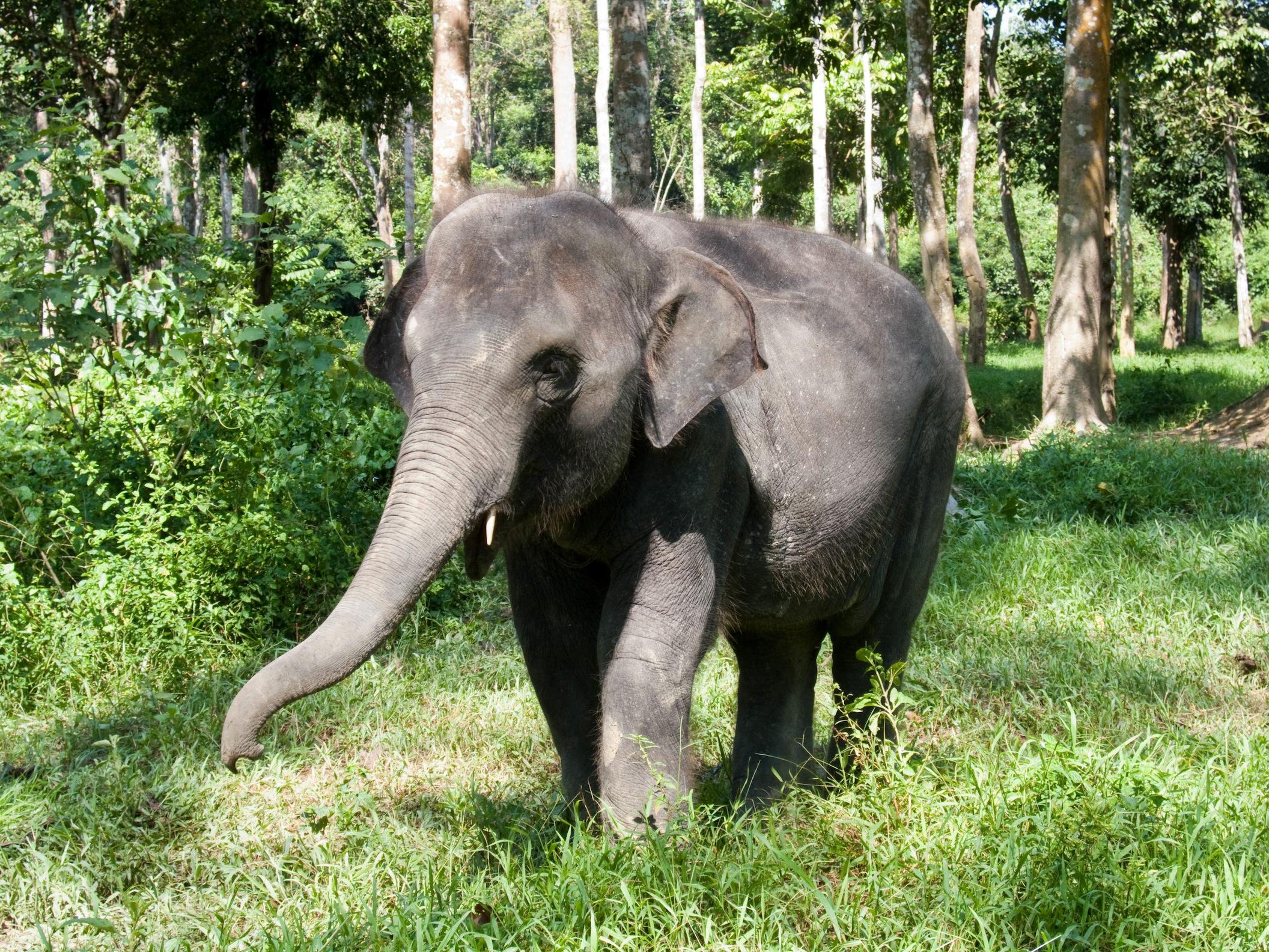 Hình ảnh con voi trong rừng