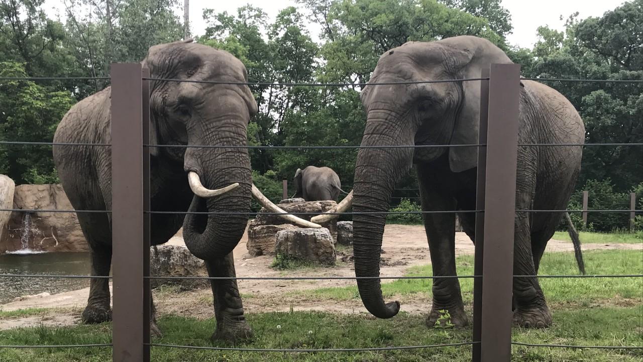 Hình ảnh con voi trong sở thú