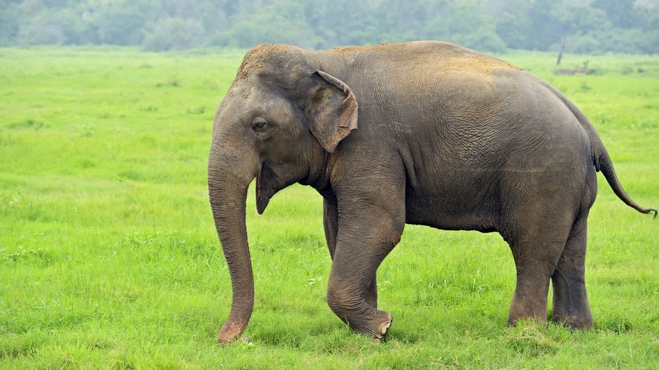 Hình ảnh con voi