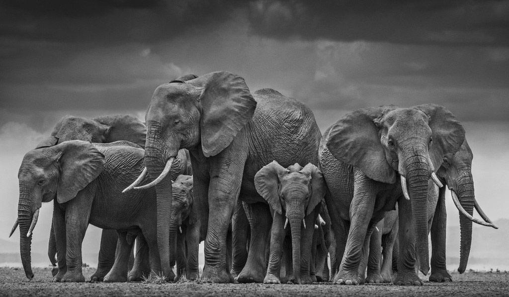 Hình ảnh đàn voi đẹp nhất