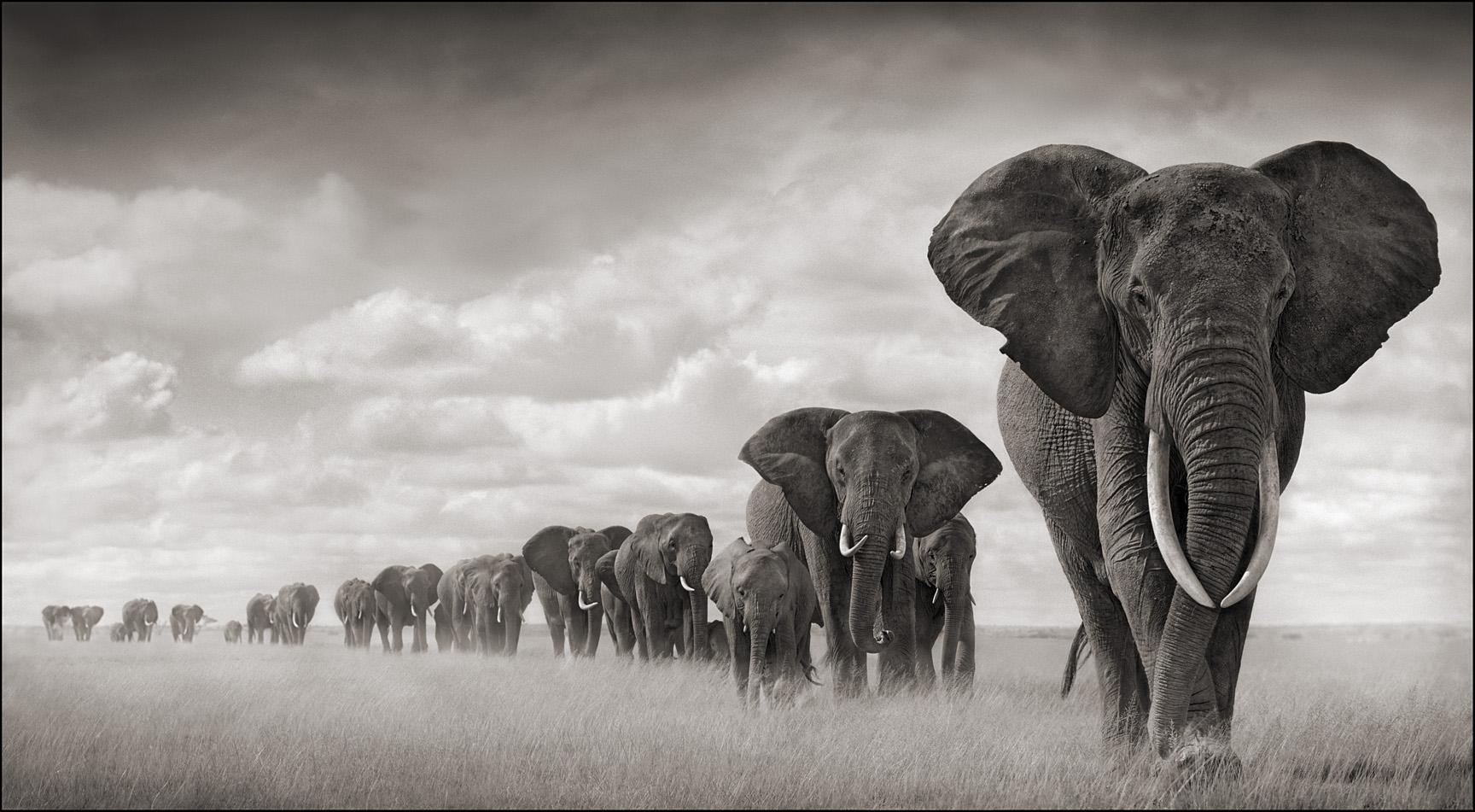 Hình ảnh đàn voi đẹp