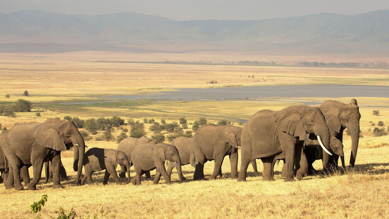 Hình ảnh đàn voi trong thiên nhiên