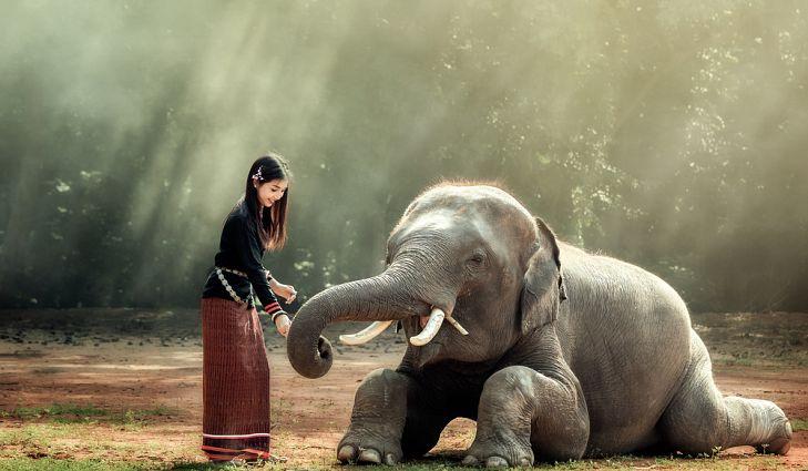 Hình ảnh đẹp về chú voi